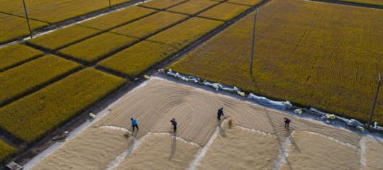 Cambiamenti climatici e sicurezza alimentare: 7 domande (e 25 risposte) per capire come siamo messi