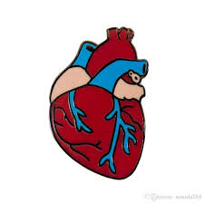 Scoperta una nuova cellula che può riparare il cuore