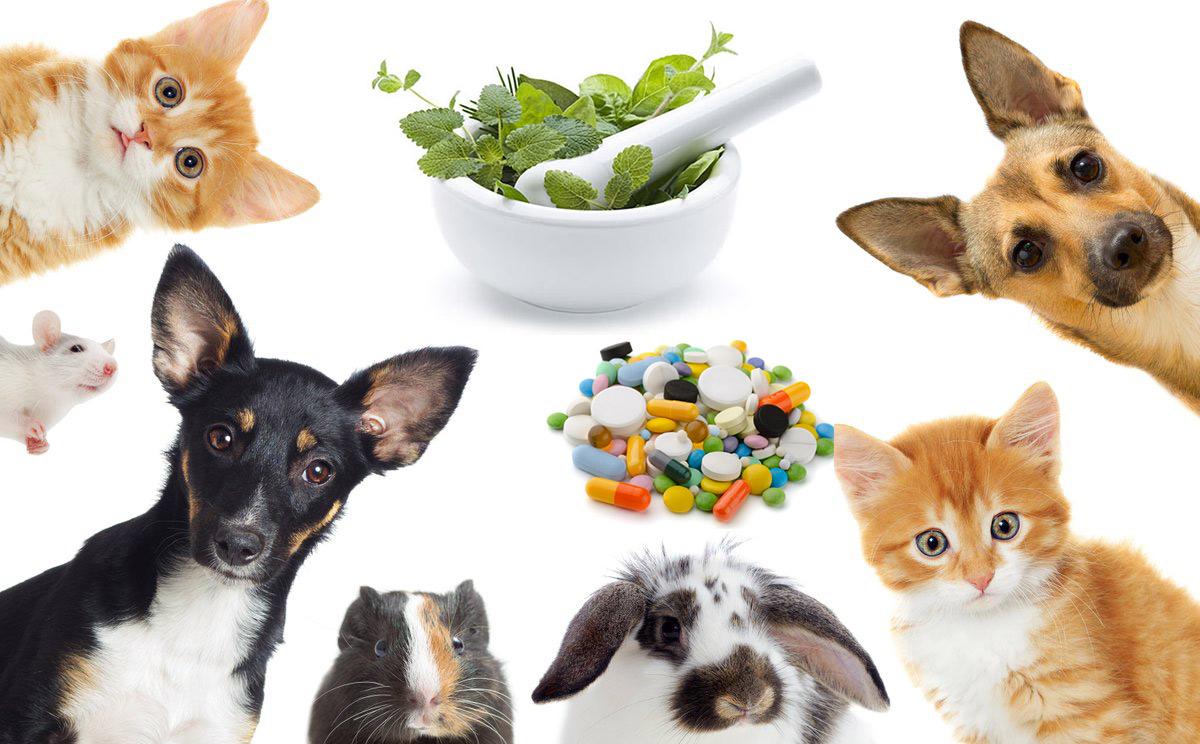 Ricetta elettronica veterinaria, Fofi e Fnovi richiamano farmacisti e medici veterinari
