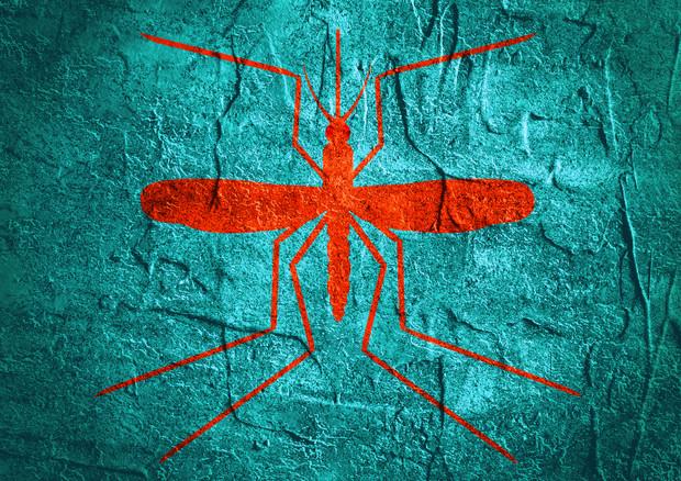 Mosquito day, dagli esperti le 10 regole anti-zanzara