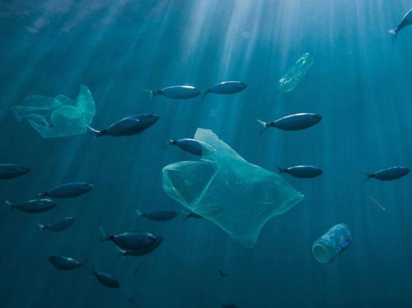 """Italiani sempre più eco-sensibili, quali spazi per una farmacia """"plastic free"""""""