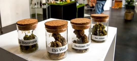 C'è un nuovo studio sugli effetti nocivi dei prodotti a base di cannabis