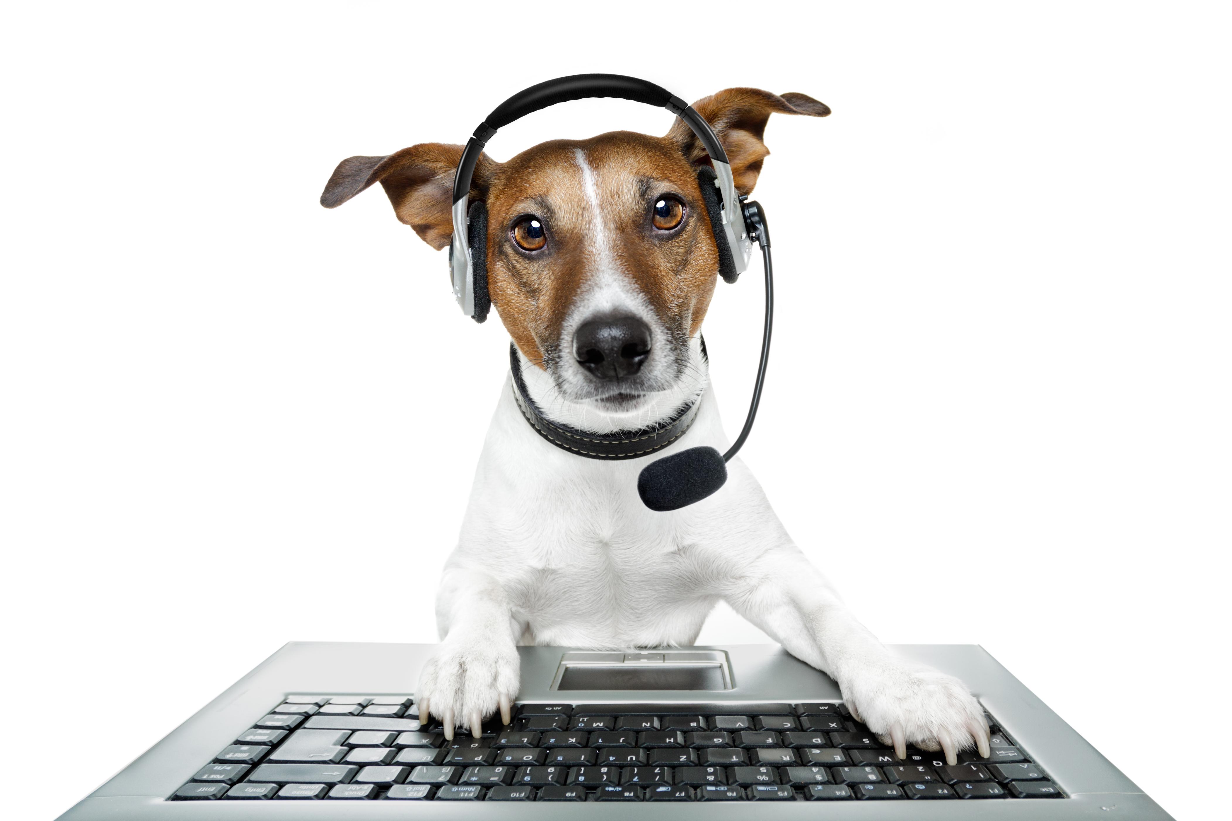 Ricetta elettronica veterinaria: invito al rispetto della normativa